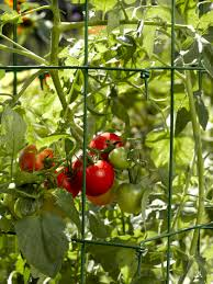 tomato cages set of 4 square tomato cages gardeners com