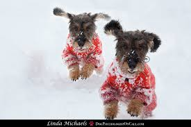 top 10 thank you gifts for your jingle dog linda michaels m a