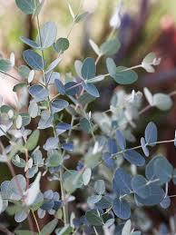 Fragrant Indoor House Plants - 731 best plants u2022 images on pinterest indoor