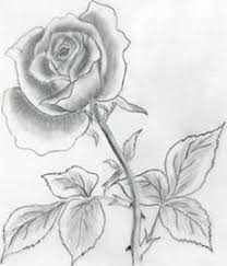 how to draw beautiful drawing how to draw flowers drawing tutorials drawing how to draw