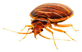 Bed Bug Heat Treatment Cost Estimate by Apartment Heat Treatment Equipment Condominium Bed Bug Heat