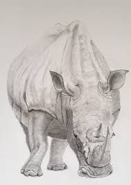 sketch for survival u2013 bid to save these beautiful animals u2013 judith