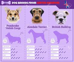 dogs breed vector infographics types of dog breeds from united