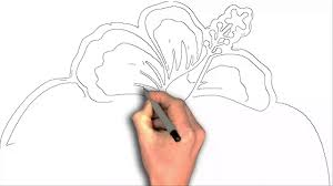 how to draw hibiscus flower cartoon youtube