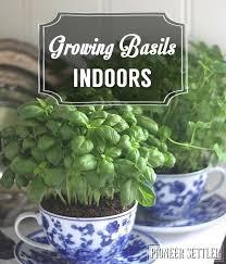 Indoor Herbal Garden Growing Basil Indoors Gardens Herbs And Plants