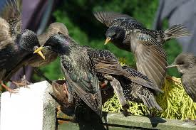 discouraging nesting birds keep bird from nesting