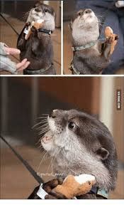 Good Day Sir Meme - 25 best memes about i said good day sir otter i said good