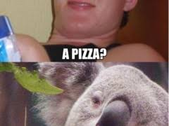 High Koala Meme - stoned koala weknowmemes
