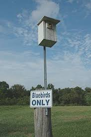 free bluebird house plans multiple designs