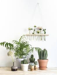 when pictures inspired me 130 plants display and cacti