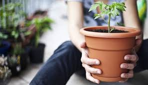 gem se pflanzen balkon für balkon welche pflanzen sie wie anbauen können