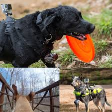tech gadgets for dog lovers