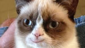 Happy Cat Meme - photoshopping grumpy cat to happy cat youtube