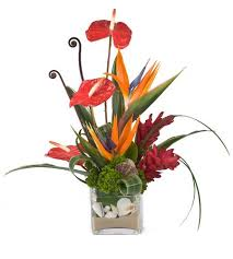 Tropical Flowers And Plants - enjoy a tropical summer with exotic flowers and plants peoples
