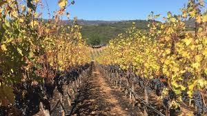 Wildfire Clearlake Ca by Northern California Vintners Assess Wildfire Damage As