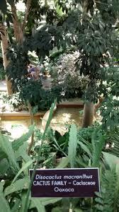 3 7 16 the history of the u s botanic garden stevens