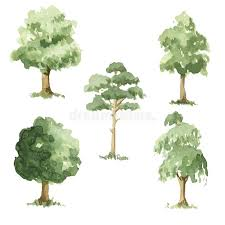 different types of trees types of trees stock illustration illustration of painted 71847847