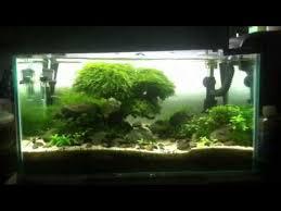 Aquascape Tank My 60cm Tank Aquascaping Youtube