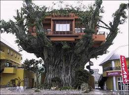 treehouse homes for sale 39 best tree house s i admire images on pinterest tree houses
