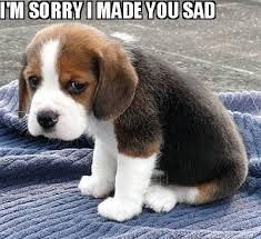 Sad Meme Generator - meme maker im sorry i made you sad
