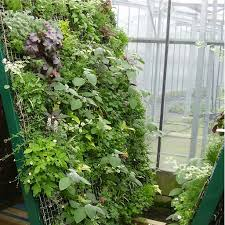 vertical space vegetable gardening in a greenhouse 2015