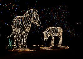 Denver Zoo Of Lights by Features Light Decor Zoo Lights Denver Zoo Georgious 145 365