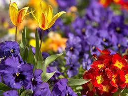 Spring Flower Garden Cultivate Flower Beds Year Round Hgtv