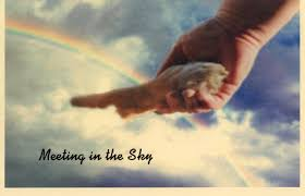 card 06 meeting in the sky pet sympathy cards cat
