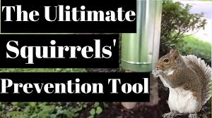 how to keep squirrels out of your garden how to repel squirrels