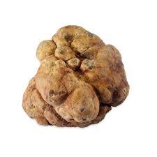 italian white truffle fresh bianchetti white truffles marx foods
