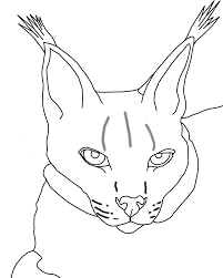 lynx coloring page animals town animals color sheet lynx