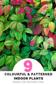 biggest house plants colourful and patterned indoor plants are 2018 s biggest greenery