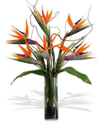 the bird of paradise tropical floral arrangement in minneapolis