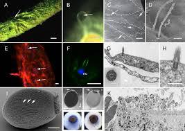 elements of a u0027nervous system u0027 in sponges journal of