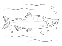 salmon coloring pages free coloring pages