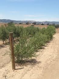 olive trellis jim u0027s supply company inc