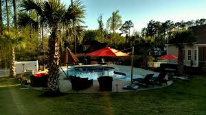 paradise palms nc raleigh palm trees for sale serving