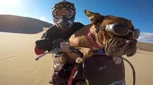 boxer dog utah gopro lexus the dirt bike dog youtube