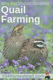 991 best taf homestead livestock images on pinterest raising