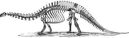 dinosaur bones coloring page dinosaur skeleton coloring pages