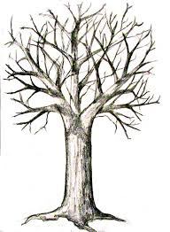 branch tree trunk pencil and in color branch tree trunk