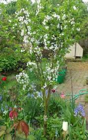 Stunning Small Backyard Orchard Pictures Design Ideas Gardening - Backyard orchard design