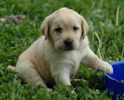 cute dog wallpapers cute dog wallpapers cute wallpapers