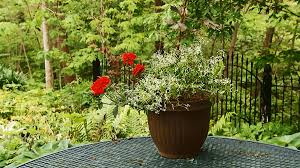 Plant Combination Ideas For Container Gardens Container Garden Recipes For Shade