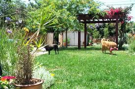 Backyard For Dogs Landscaping Ideas Pergola Ideas For Small Backyards Landscaping And Outdoor Building