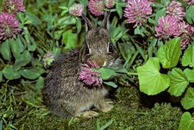 pest rabbits control and prevention what really works