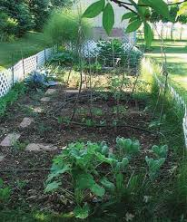 family vegetable garden home gardening uga cooperative extension