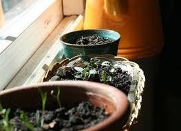 Self Watering Planters by Best 25 Self Watering Pots Ideas On Pinterest Grow Boxes Water