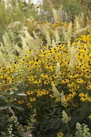 native plant centre 48 best native plants images on pinterest native plants