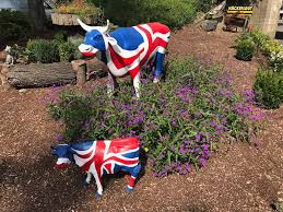 Blackburn Flags Little Britain